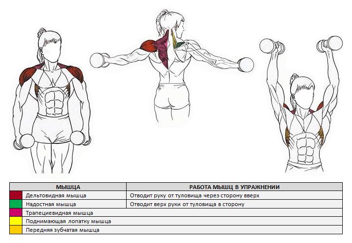 лучшие упражнения для дельтовидных мышц картинки приготовить мидии ракушках